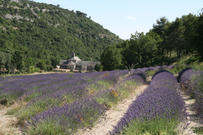 Sénanque Abbey near Gordes (20 minute drive)